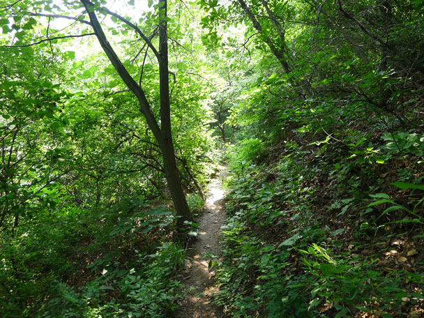 A shady detour around a broken section of wall - Switchback Great Wall, 2017/4/6