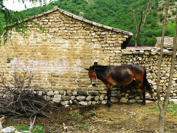 A horse hanging about. You can spot bricks from the Great Wall in a lot of the houses here - Shuitou Village Loop hike, 2017/7/15