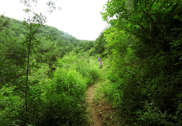 We followed old field trails through the forest on the way up to the Great Wall - Jiankou 'Big West' Great Wall, 2017/7/27
