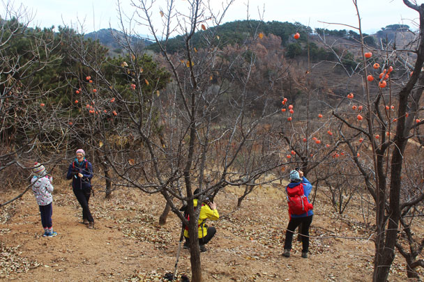 Shunyi Hikers Rolling Hills and Empty Lanes, 2017/11/19 photo #8