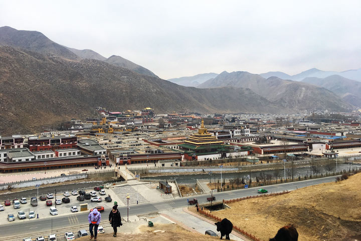 'Unveiling the Buddha' at Labrang Monastery, 2018/02/16 photo #6