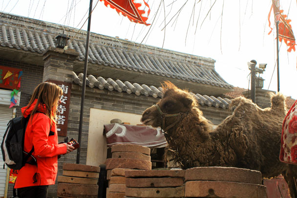 There was a camel by the pagoda … curious! - Yu County overnight, March 2018