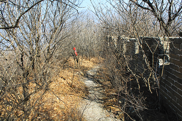 This part of the wall is very overgrown with trees - Chinese Knot Great Wall, 2018/03/10