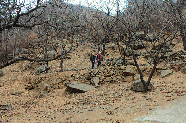 For a lot of the hike we were on farmers field trails through terraced orchards - Big Black Mountain to the Walled Village, 2018/03/11