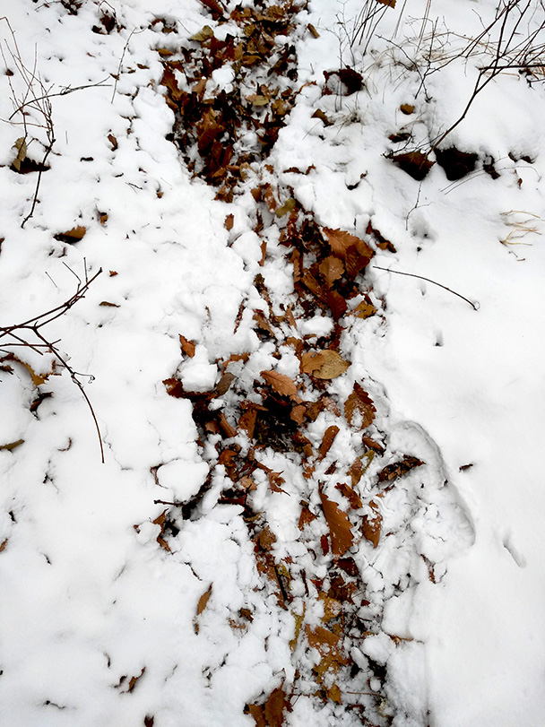 A bed of leaves below the snow - The Big West Wall in White, 2018/03/17
