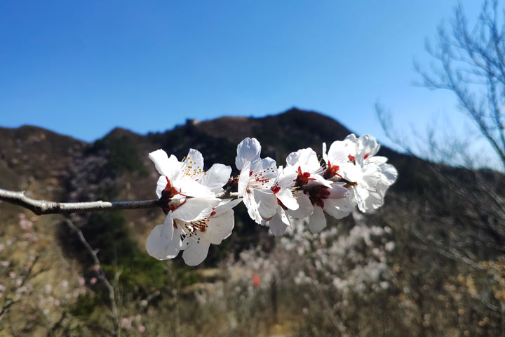 Great Wall Huanghuacheng to the Walled Village, 2019/03/21 photo #18