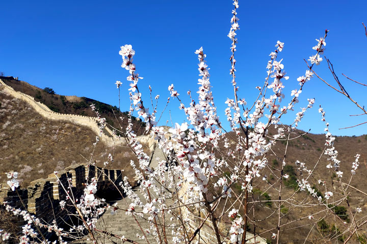 Great Wall Huanghuacheng to the Walled Village, 2019/03/21 photo #20