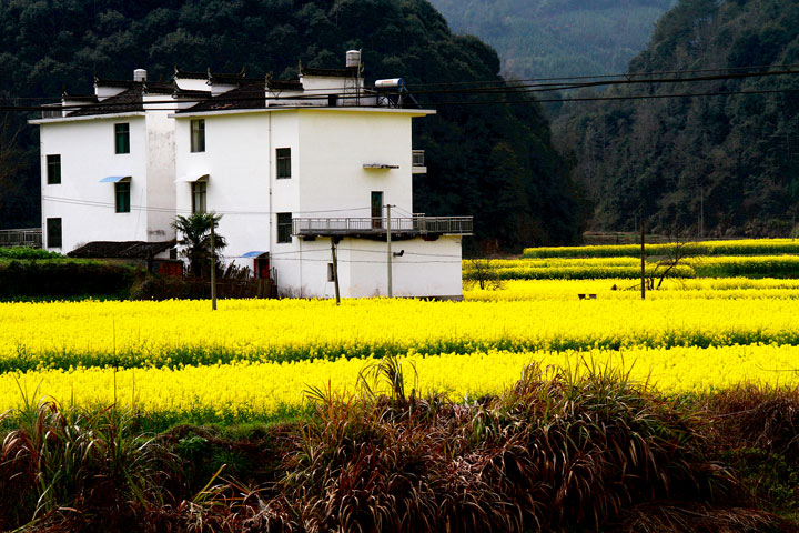Wuyuan 'Fields of Flowers', Jiangxi Province, 2019/03/14-16 photo #1
