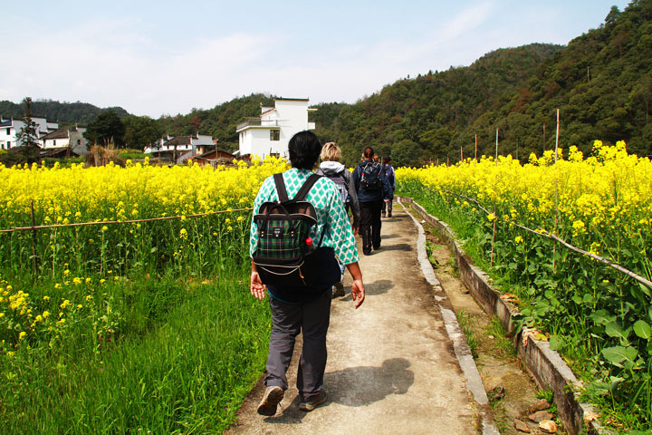 Wuyuan 'Fields of Flowers', Jiangxi Province, 2019/03/14-16 photo #5