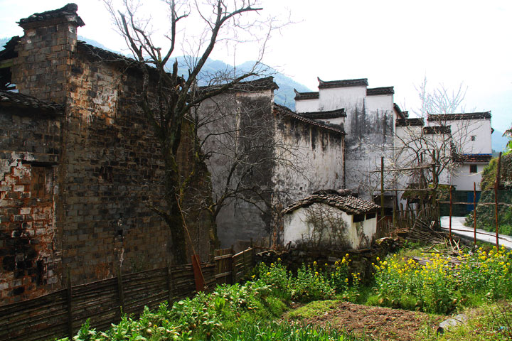 Wuyuan 'Fields of Flowers', Jiangxi Province, 2019/03/14-16 photo #19