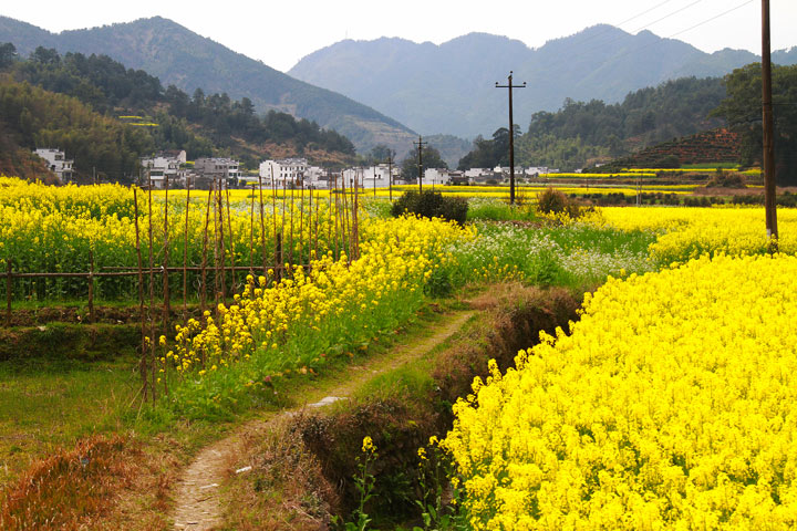 Wuyuan 'Fields of Flowers', Jiangxi Province, 2019/03/14-16 photo #20