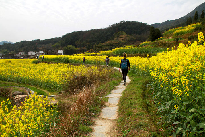 Wuyuan 'Fields of Flowers', Jiangxi Province, 2019/03/14-16 photo #23