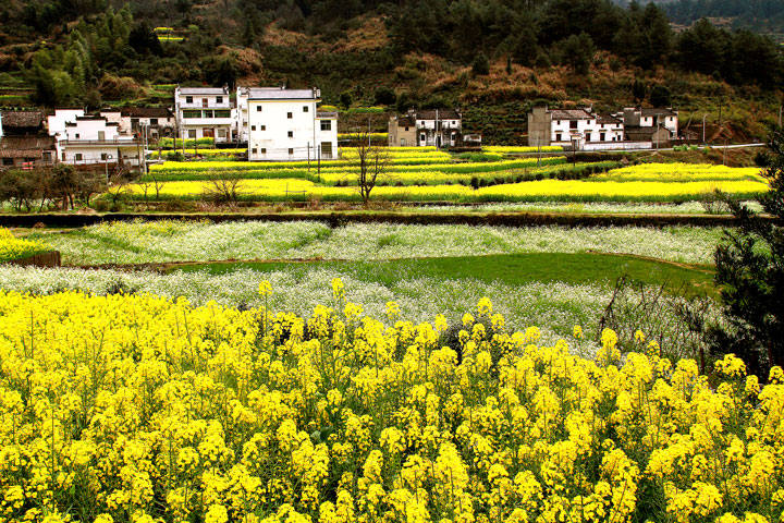 Wuyuan 'Fields of Flowers', Jiangxi Province, 2019/03/14-16 photo #24