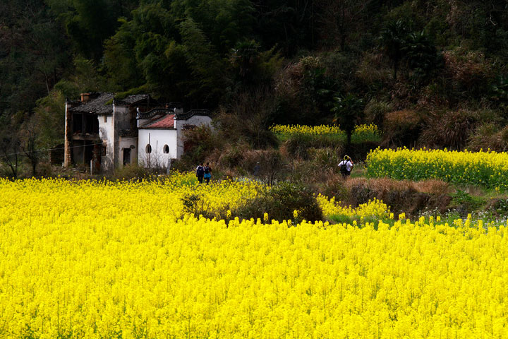 Wuyuan 'Fields of Flowers', Jiangxi Province, 2019/03/14-16 photo #26