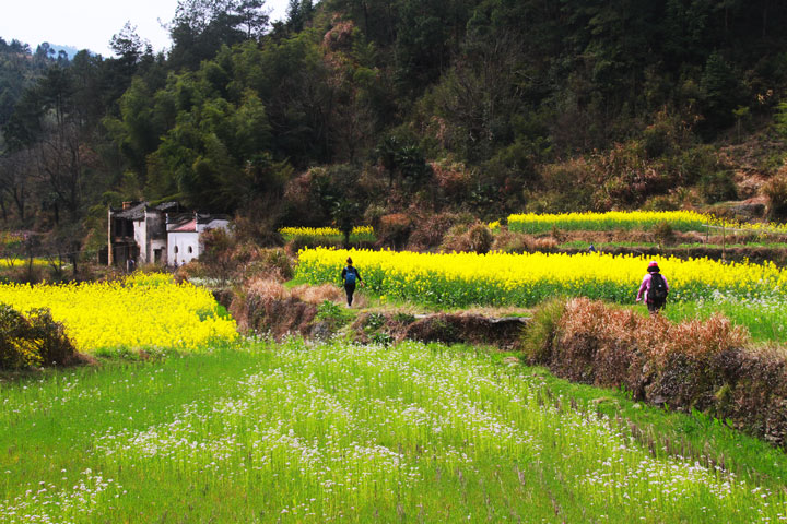 Wuyuan 'Fields of Flowers', Jiangxi Province, 2019/03/14-16 photo #27