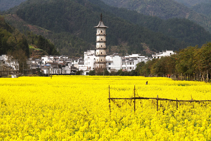 Wuyuan 'Fields of Flowers', Jiangxi Province, 2019/03/14-16 photo #31