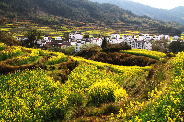 Wuyuan 'Fields of Flowers', Jiangxi Province, 2019/03/14-16 photo #34