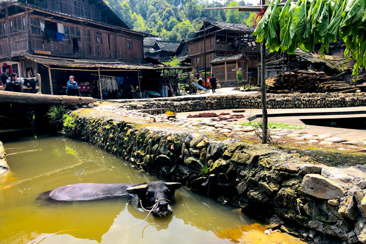 Guizhou Miao and Dong culture in the mountains (5 days), 2019/04/03 photo #25