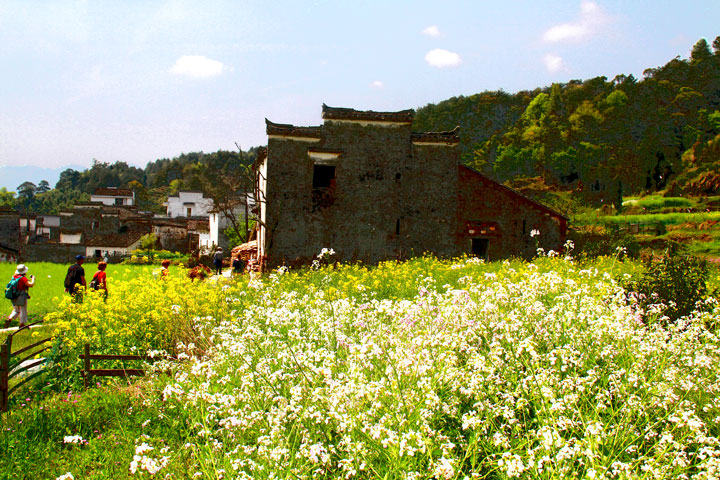 Wuyuan 'Fields of Flowers', Jiangxi Province, 2019/04/04 photo #27