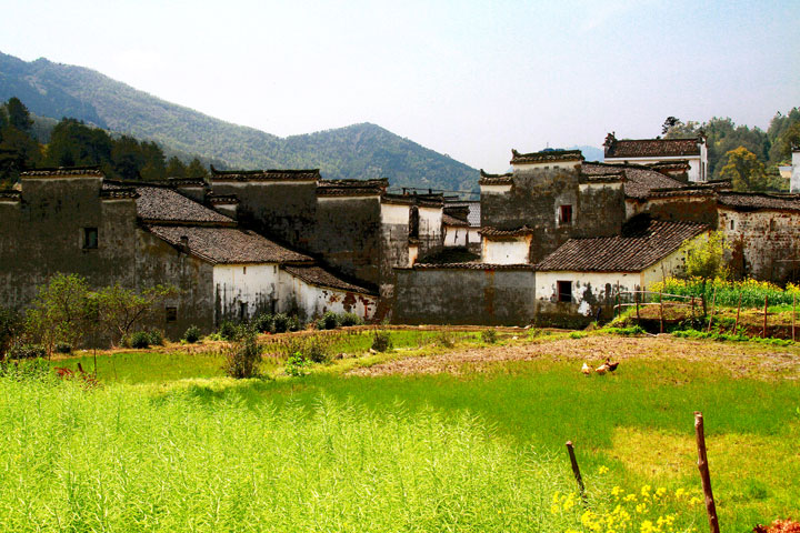 Wuyuan 'Fields of Flowers', Jiangxi Province, 2019/04/04 photo #29