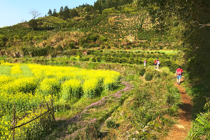 Wuyuan 'Fields of Flowers', Jiangxi Province, 2019/04/04 photo #38