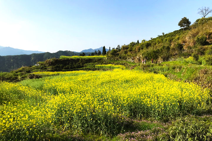 Wuyuan 'Fields of Flowers', Jiangxi Province, 2019/04/04 photo #39
