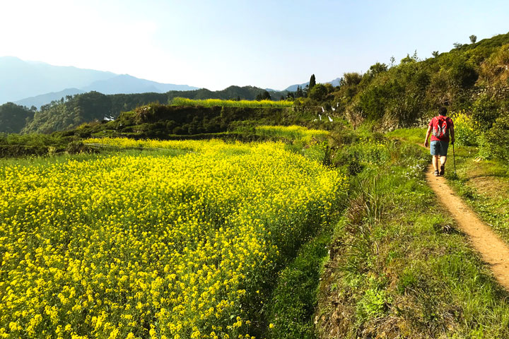 Wuyuan 'Fields of Flowers', Jiangxi Province, 2019/04/04 photo #40