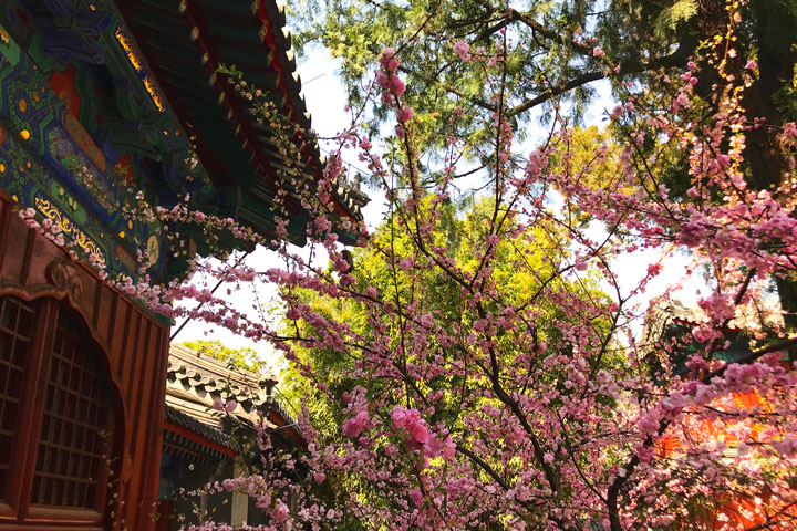Walk Down The Incense Trail to Dajue Temple, 2019/04/07 photo #20