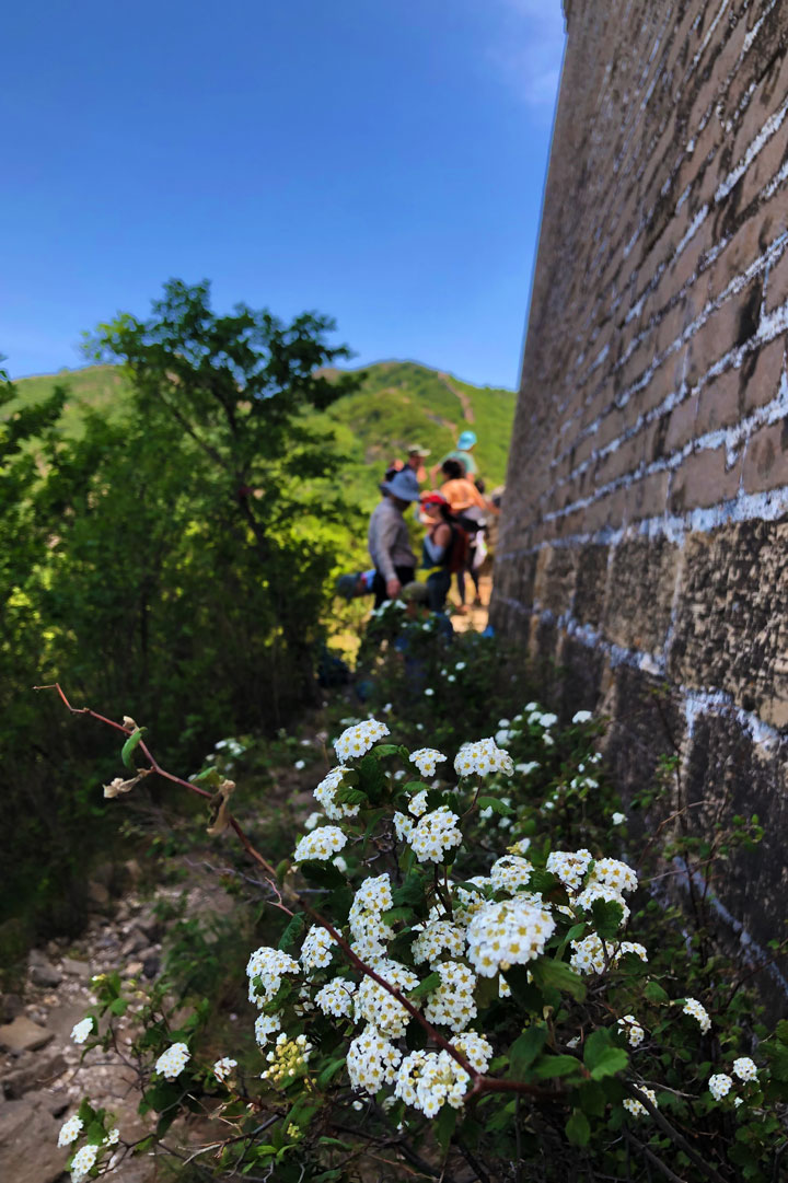 Switchback Great Wall, 2019/06/07 photo #16