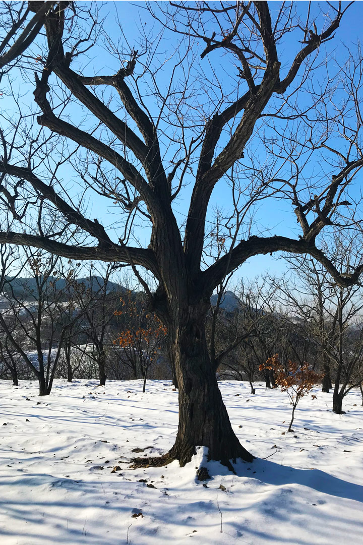 Auspicious Village hike, 2019/12/21 photo #8