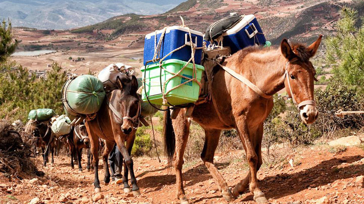 A mule team on the ancient Tea and Horse Trail