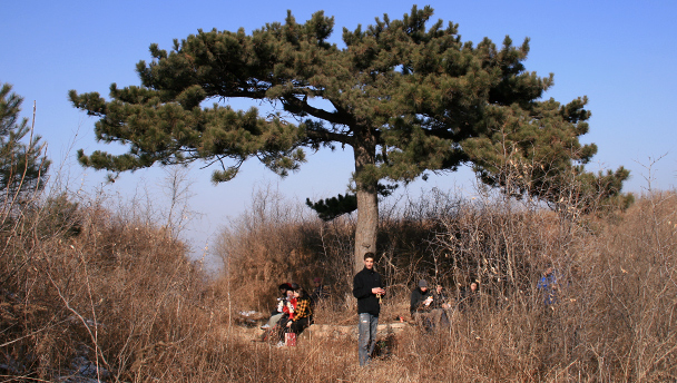 Hikers by a pine tree in the hills