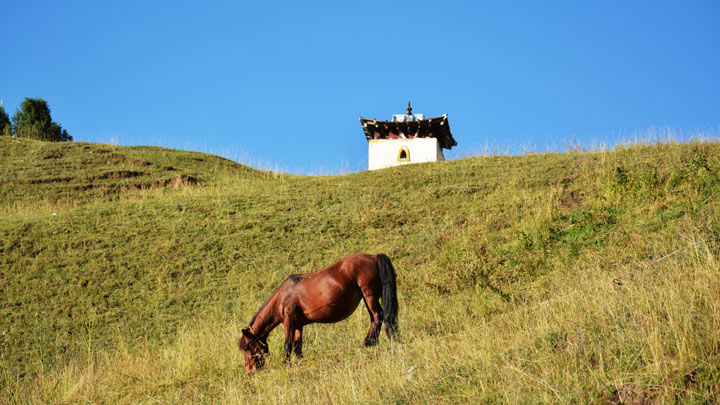 A horse in the hills near Langmusi