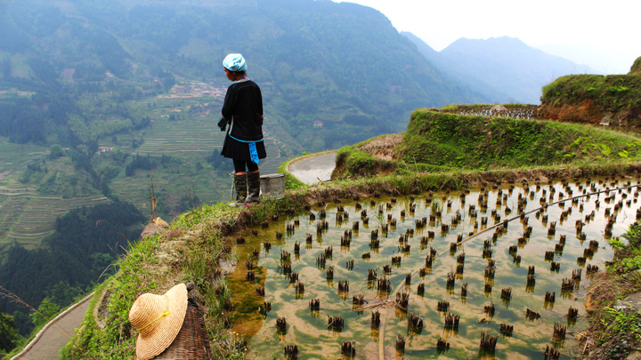 A farmer looks out over a deep valley terraced with rice paddies
