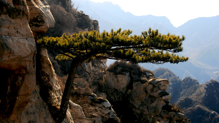 A pine tree clings to a cliff in the mountains above Immortal Valley