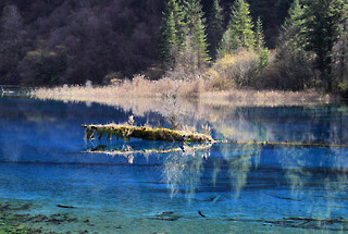 A mossy log in Five-Flowers Lake at Jiuzhaigou