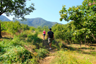 Following field trails through chestnut orchards near Longevity Village.