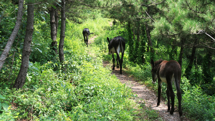 Donkeys on the trail