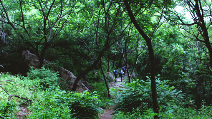 The old pilgrim trail goes through a forested valley