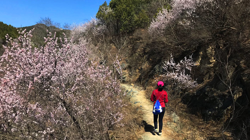 Through the Hills to the Forest Park | Flowers beside a trail in Beijing's West Mountains