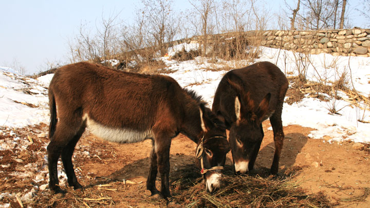 Donkeys near one of the villages