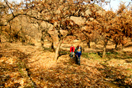 Hikers on a trail through chestnut orchards