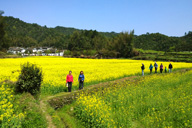 Hiking through fields of flowers near a village
