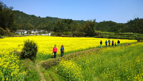 Wuyuan, Jiangxi Province | Hiking through fields of flowers near a village