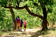 Walking trails through chestnut orchards